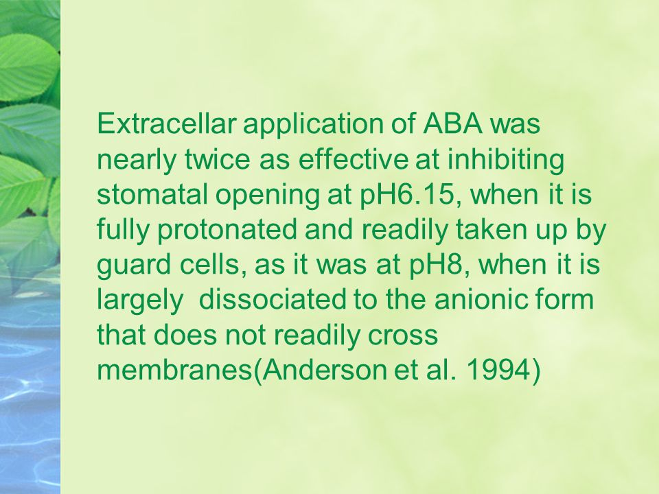Extracellar application of ABA was nearly twice as effective at inhibiting stomatal opening at pH6.15, when it is fully protonated and readily taken u