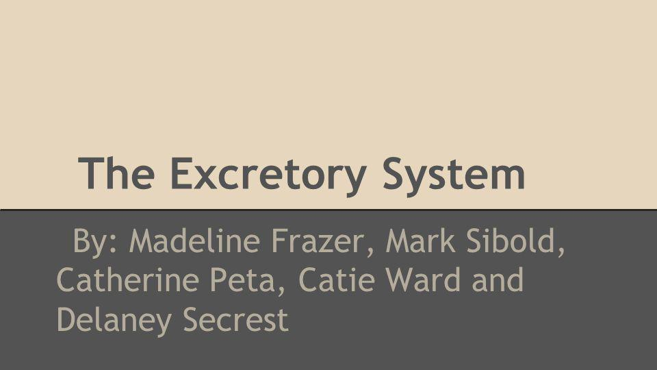 The Excretory System By: Madeline Frazer, Mark Sibold, Catherine Peta, Catie Ward and Delaney Secrest
