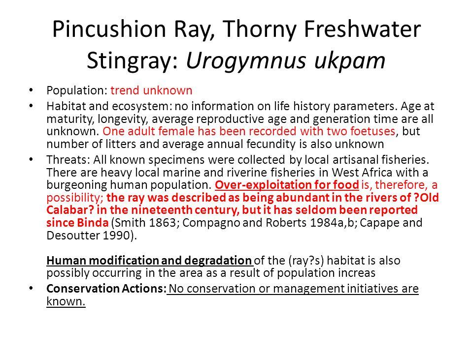 Pincushion Ray, Thorny Freshwater Stingray: Urogymnus ukpam Population: trend unknown Habitat and ecosystem: no information on life history parameters