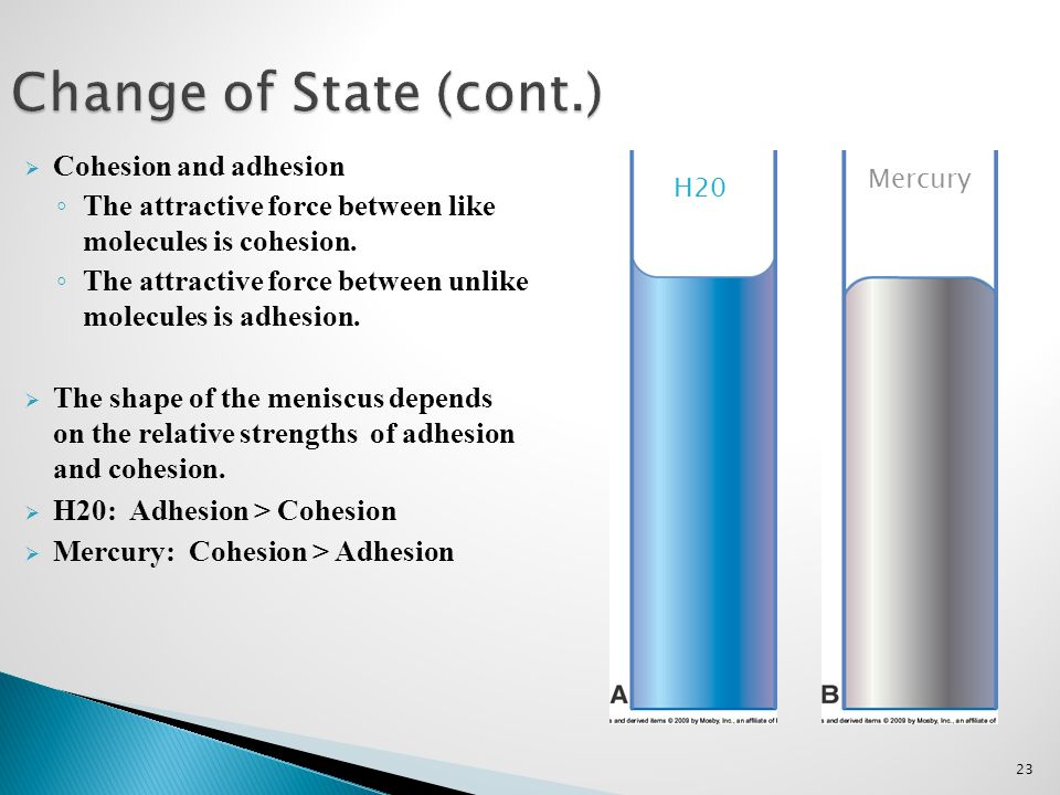 23 Change of State (cont.)  Cohesion and adhesion ◦ The attractive force between like molecules is cohesion. ◦ The attractive force between unlike mo