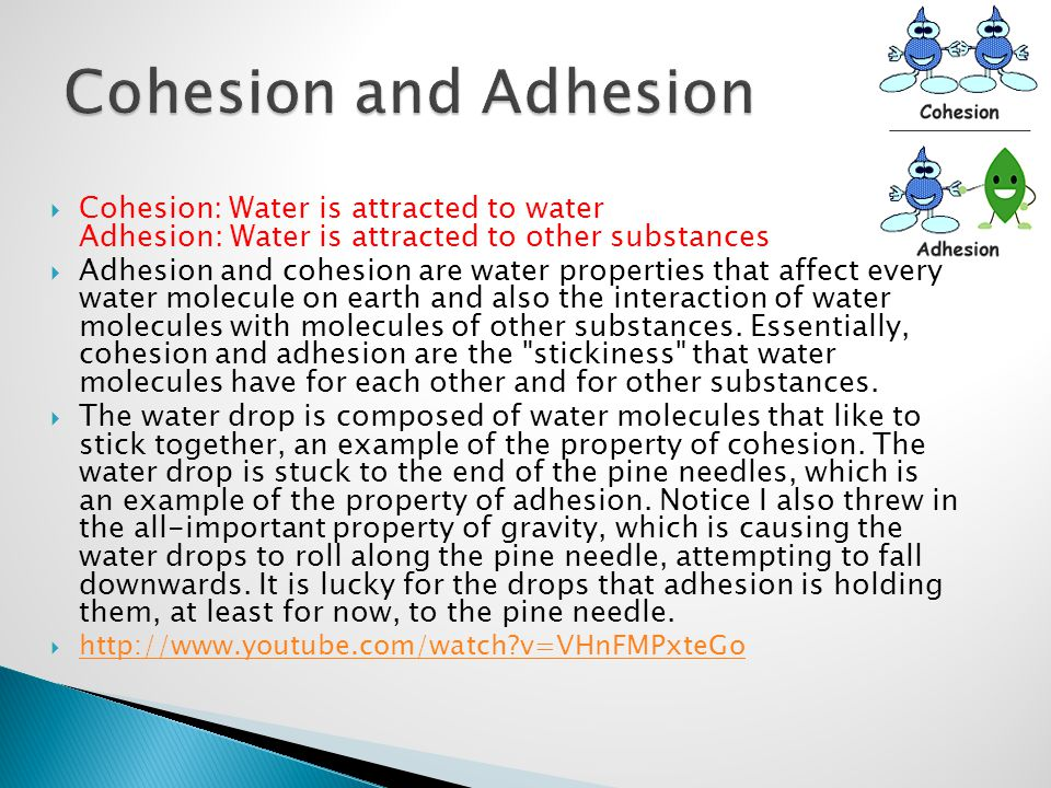  Cohesion: Water is attracted to water Adhesion: Water is attracted to other substances  Adhesion and cohesion are water properties that affect ever