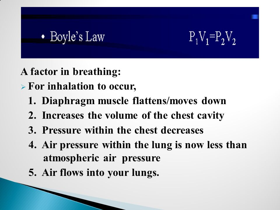 A factor in breathing:  For inhalation to occur, 1. Diaphragm muscle flattens/moves down 2. Increases the volume of the chest cavity 3. Pressure with