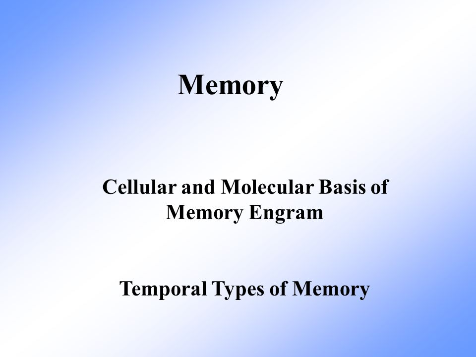 Temporal phases of memory (based on different biological mechanisms)