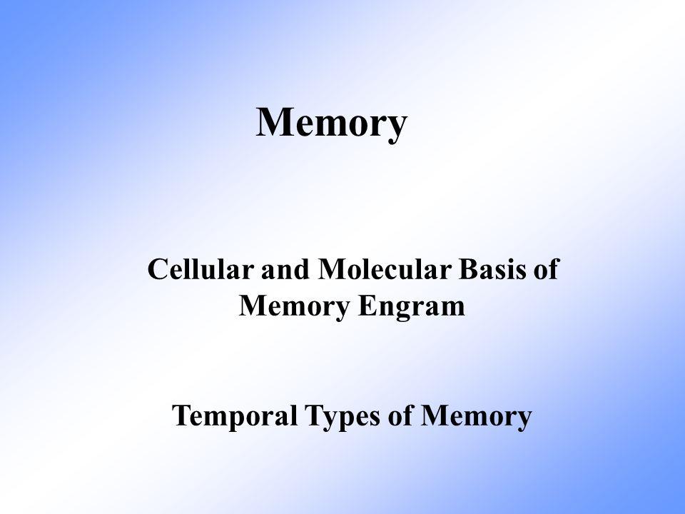 Long term memory nonassociateve Sensitization By a strong stimulation.