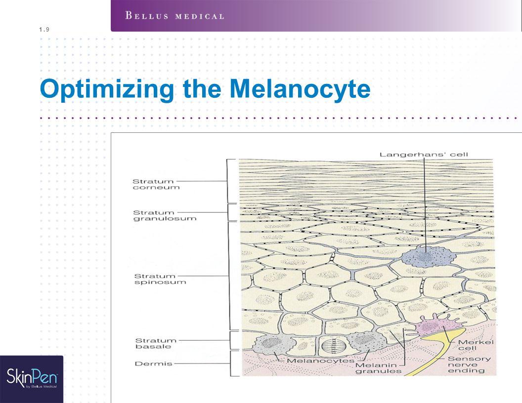 Optimizing the Melanocyte 1.9