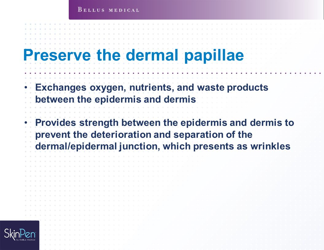 Preserve the dermal papillae Exchanges oxygen, nutrients, and waste products between the epidermis and dermis Provides strength between the epidermis