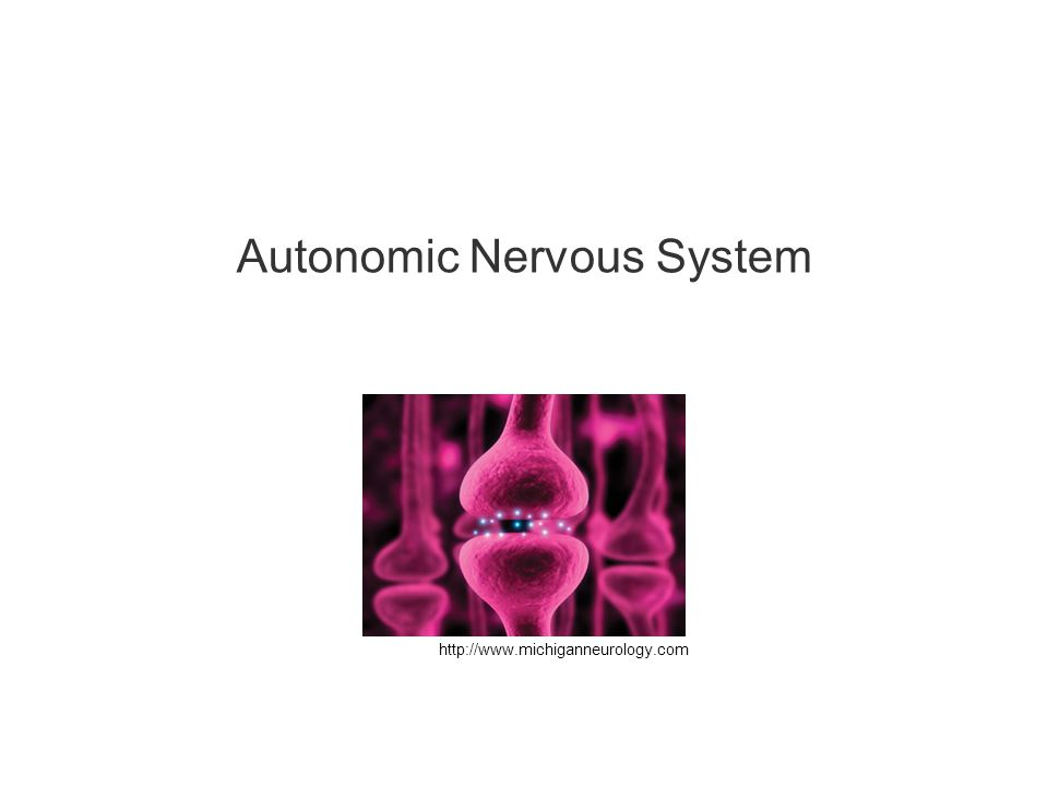 http://www.michiganneurology.com Autonomic Nervous System