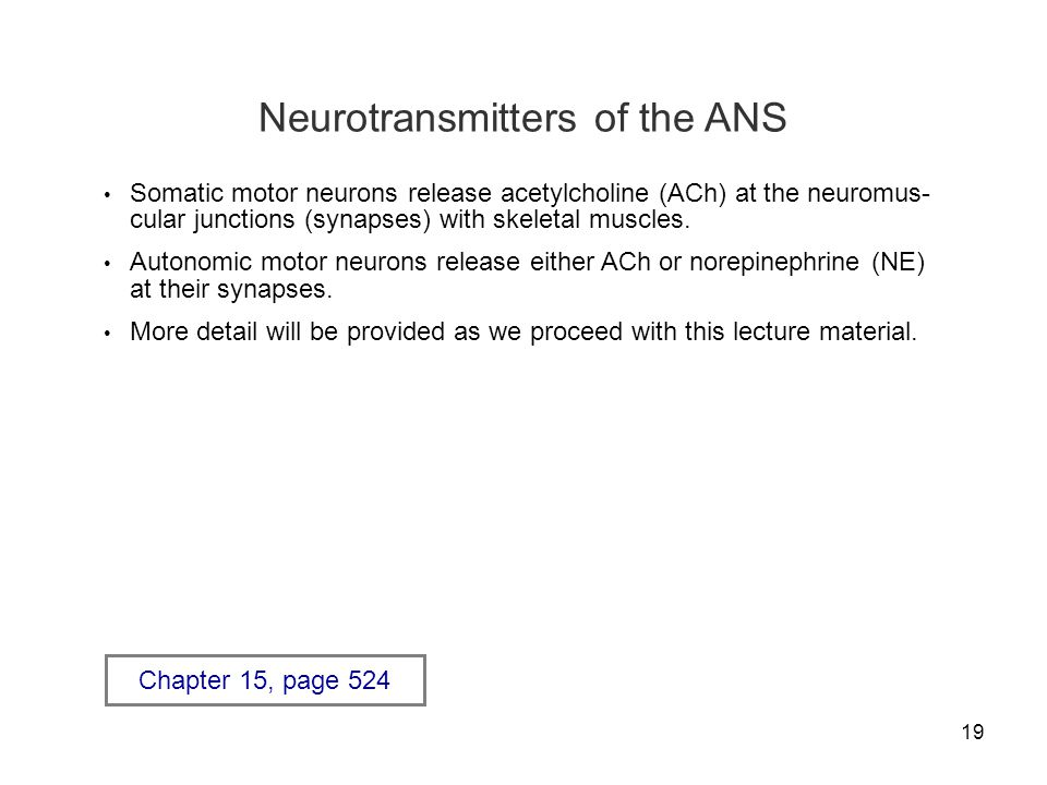 19 Neurotransmitters of the ANS Somatic motor neurons release acetylcholine (ACh) at the neuromus- cular junctions (synapses) with skeletal muscles. A