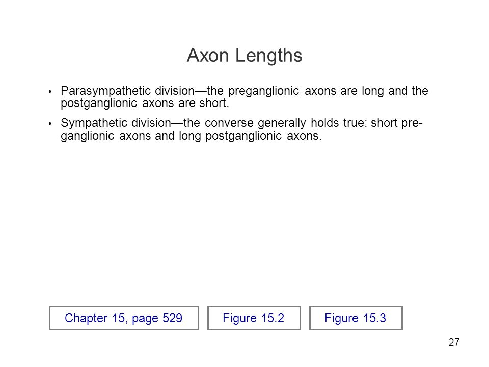 27 Axon Lengths Parasympathetic division—the preganglionic axons are long and the postganglionic axons are short. Sympathetic division—the converse ge