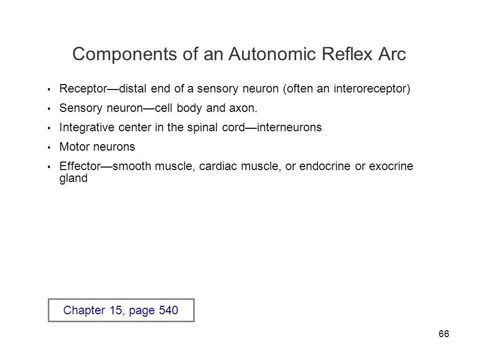 66 Components of an Autonomic Reflex Arc Receptor—distal end of a sensory neuron (often an interoreceptor) Sensory neuron—cell body and axon. Integrat