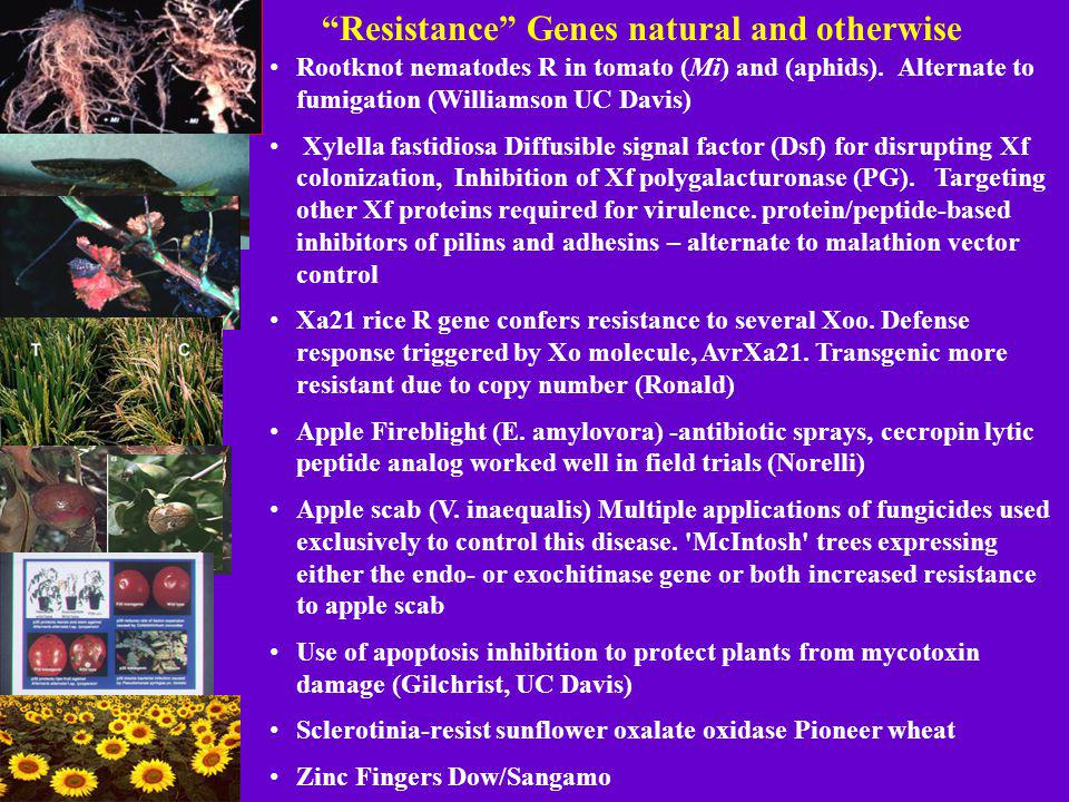 Resistance Genes natural and otherwise Rootknot nematodes R in tomato (Mi) and (aphids).