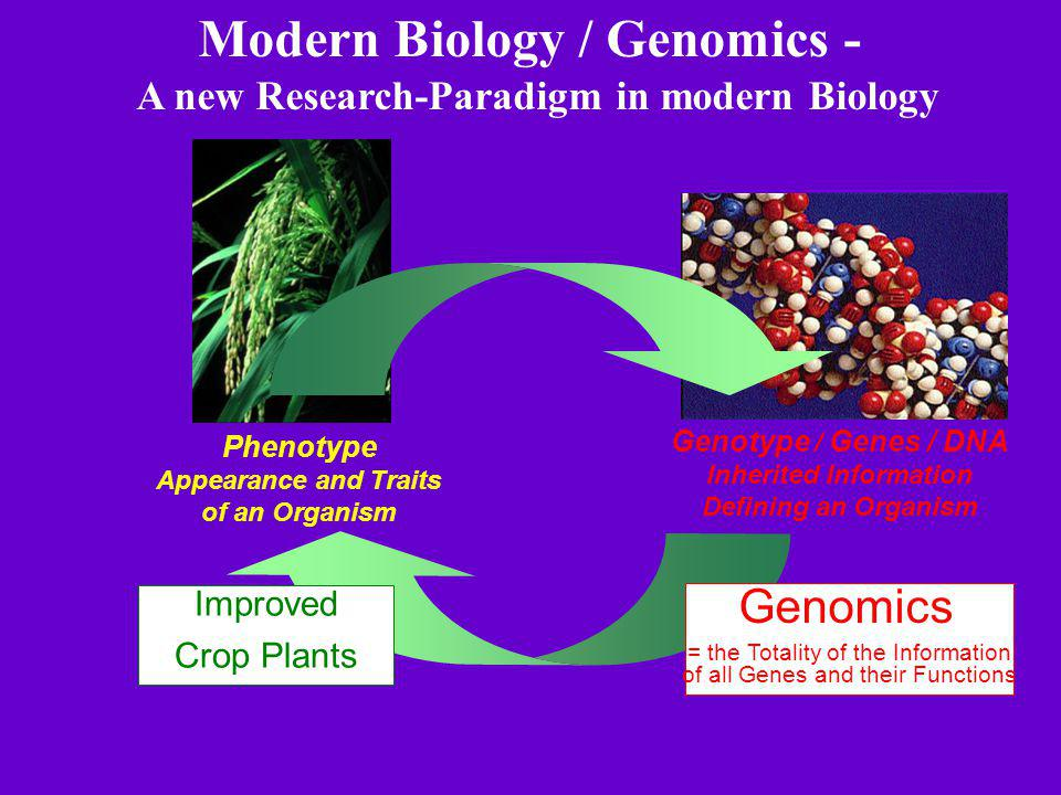Modern Biology / Genomics - A new Research-Paradigm in modern Biology Genotype / Genes / DNA Inherited Information Defining an Organism Phenotype Appearance and Traits of an Organism Improved Crop Plants Genomics = the Totality of the Information of all Genes and their Functions
