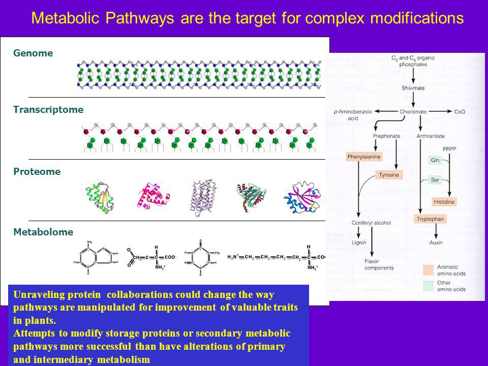 Metabolic Pathways are the target for complex modifications Genome Transcriptome Proteome Metabolome Unraveling protein collaborations could change the way pathways are manipulated for improvement of valuable traits in plants.