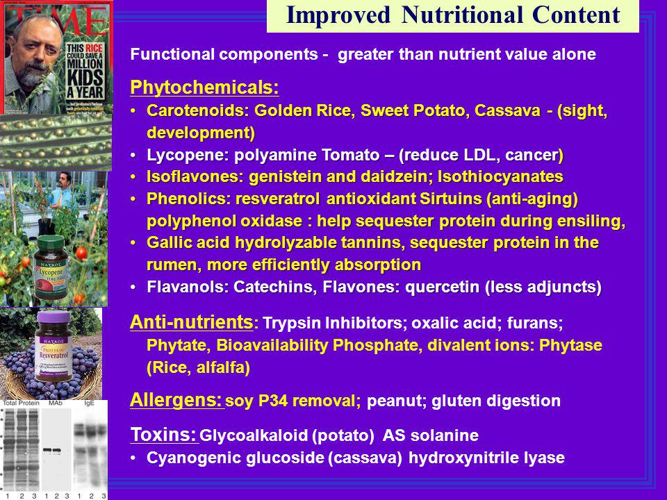Improved Nutritional Content Functional components - greater than nutrient value alone Phytochemicals: Carotenoids: Golden Rice, Sweet Potato, Cassava - (sight, development)Carotenoids: Golden Rice, Sweet Potato, Cassava - (sight, development) Lycopene: polyamine Tomato – (reduce LDL, cancer)Lycopene: polyamine Tomato – (reduce LDL, cancer) Isoflavones: genistein and daidzein; IsothiocyanatesIsoflavones: genistein and daidzein; Isothiocyanates Phenolics: resveratrol antioxidant Sirtuins (anti-aging)Phenolics: resveratrol antioxidant Sirtuins (anti-aging) polyphenol oxidase : help sequester protein during ensiling, Gallic acid hydrolyzable tannins, sequester protein in the rumen, more efficiently absorptionGallic acid hydrolyzable tannins, sequester protein in the rumen, more efficiently absorption Flavanols: Catechins, Flavones: quercetin (less adjuncts)Flavanols: Catechins, Flavones: quercetin (less adjuncts) Anti-nutrients : Trypsin Inhibitors; oxalic acid; furans; Phytate, Bioavailability Phosphate, divalent ions: Phytase (Rice, alfalfa) Allergens: soy P34 removal; peanut; gluten digestion Toxins: Glycoalkaloid (potato) AS solanine Cyanogenic glucoside (cassava) hydroxynitrile lyase
