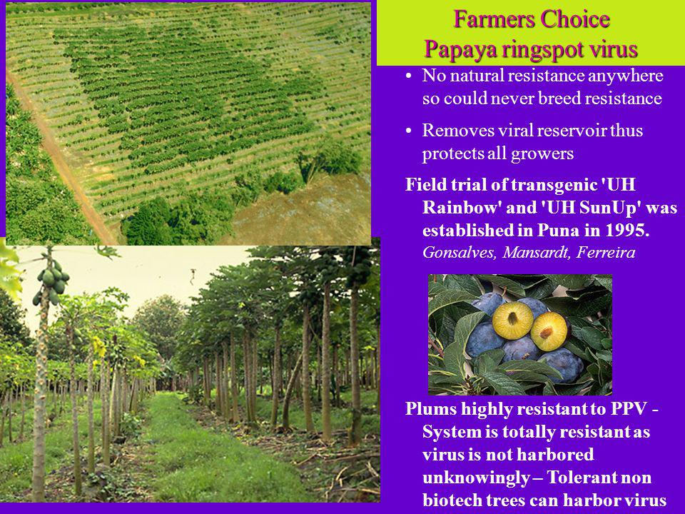 No natural resistance anywhere so could never breed resistance Removes viral reservoir thus protects all growers Field trial of transgenic UH Rainbow and UH SunUp was established in Puna in 1995.