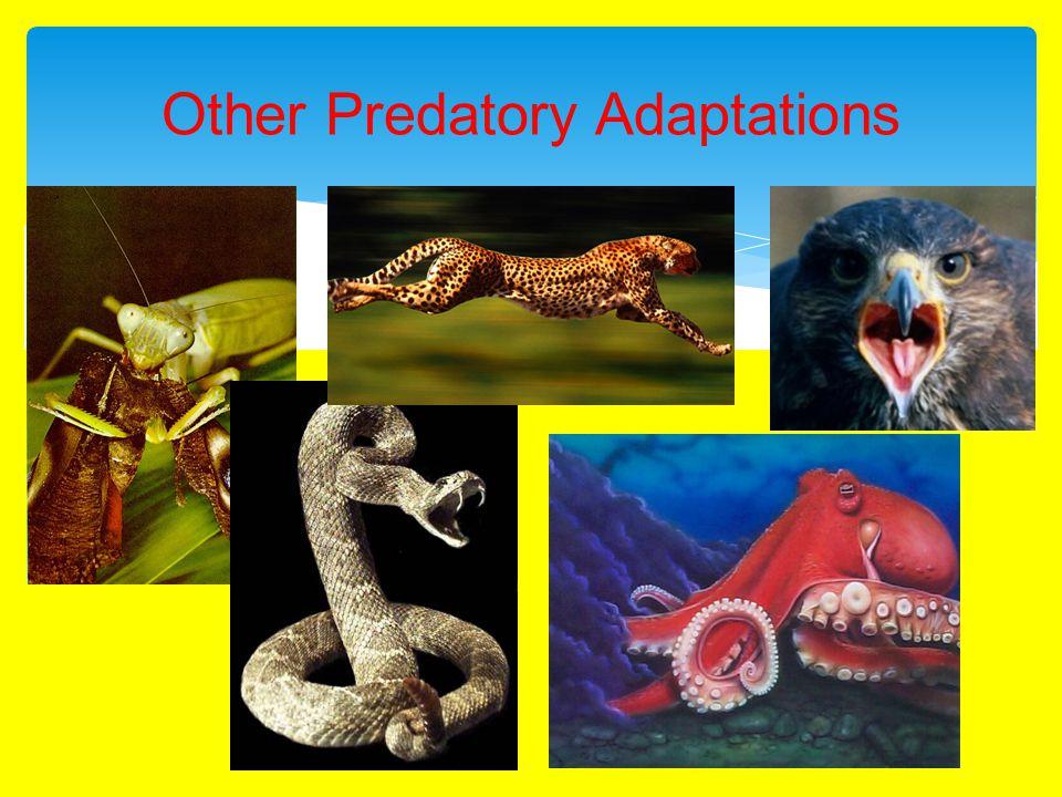Other Predatory Adaptations