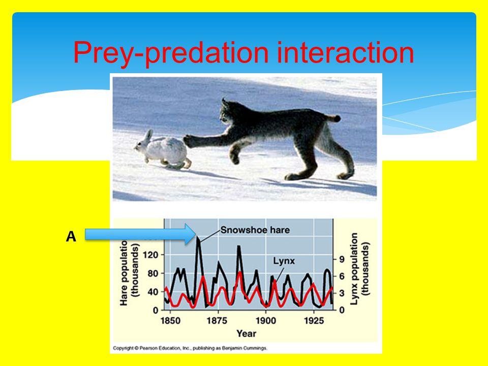 Prey-predation interaction A