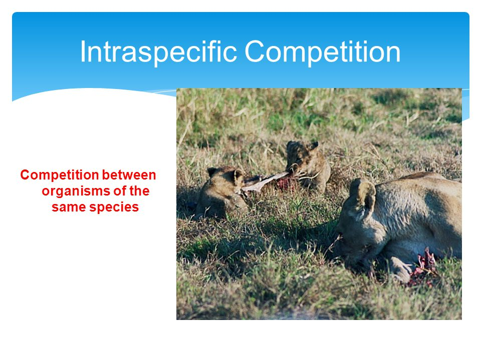 Intraspecific Competition Competition between organisms of the same species