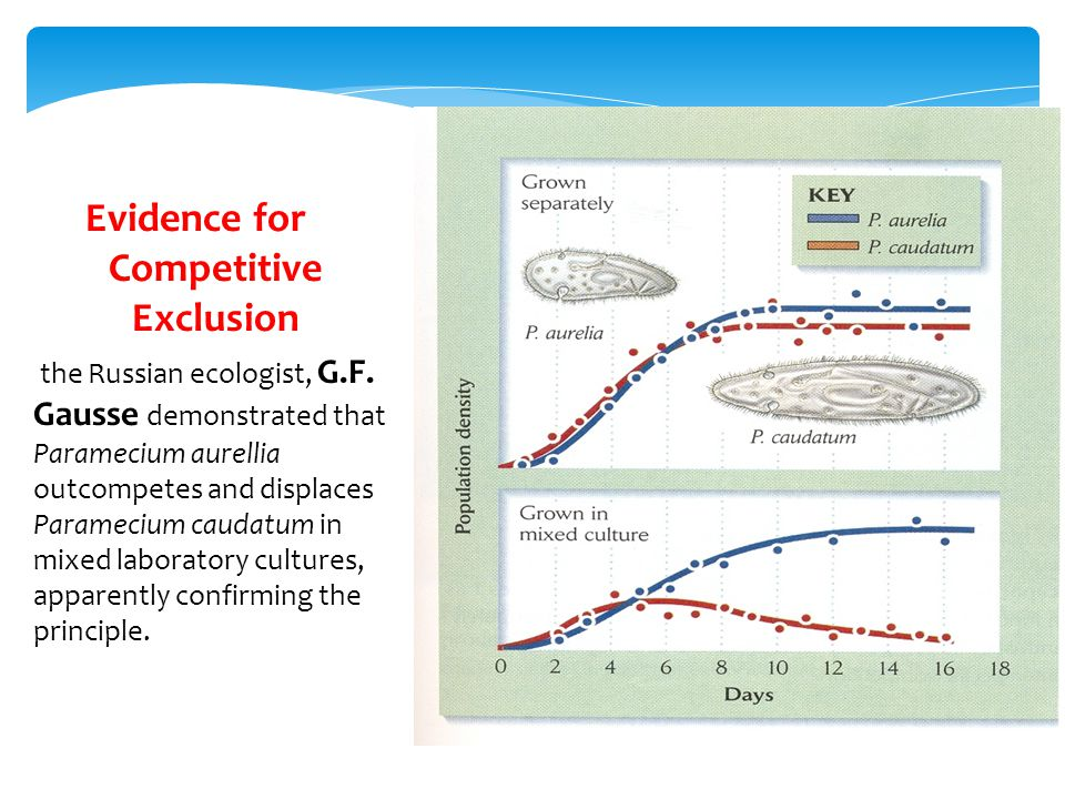 Evidence for Competitive Exclusion the Russian ecologist, G.F.