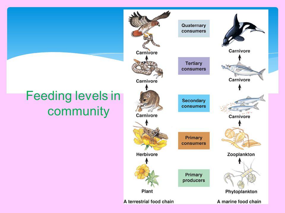 Feeding levels in a community