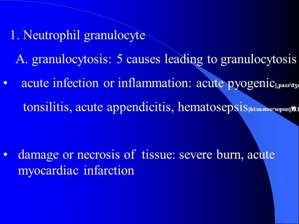 1.Neutrophil granulocyte A.