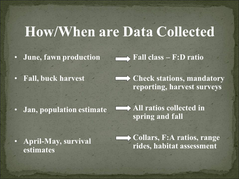 How/When are Data Collected June, fawn production Fall, buck harvest Jan, population estimate April-May, survival estimates Fall class – F:D ratio Check stations, mandatory reporting, harvest surveys All ratios collected in spring and fall Collars, F:A ratios, range rides, habitat assessment