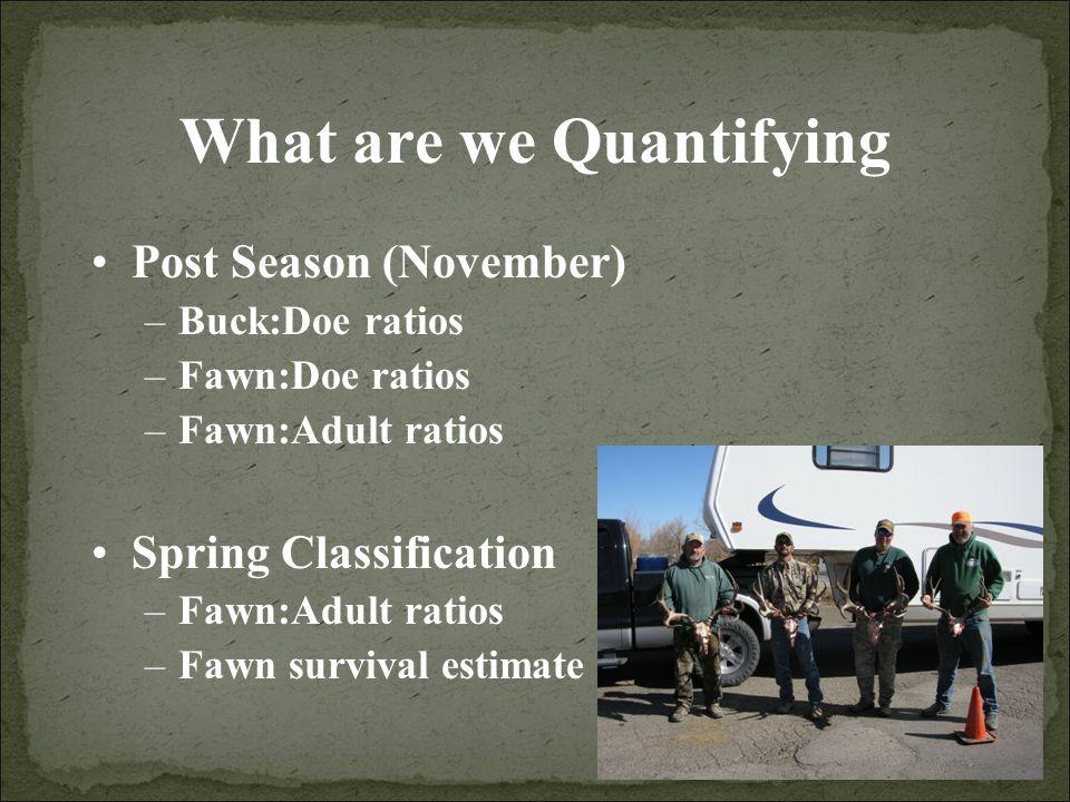 What are we Quantifying Post Season (November) –Buck:Doe ratios –Fawn:Doe ratios –Fawn:Adult ratios Spring Classification –Fawn:Adult ratios –Fawn survival estimate
