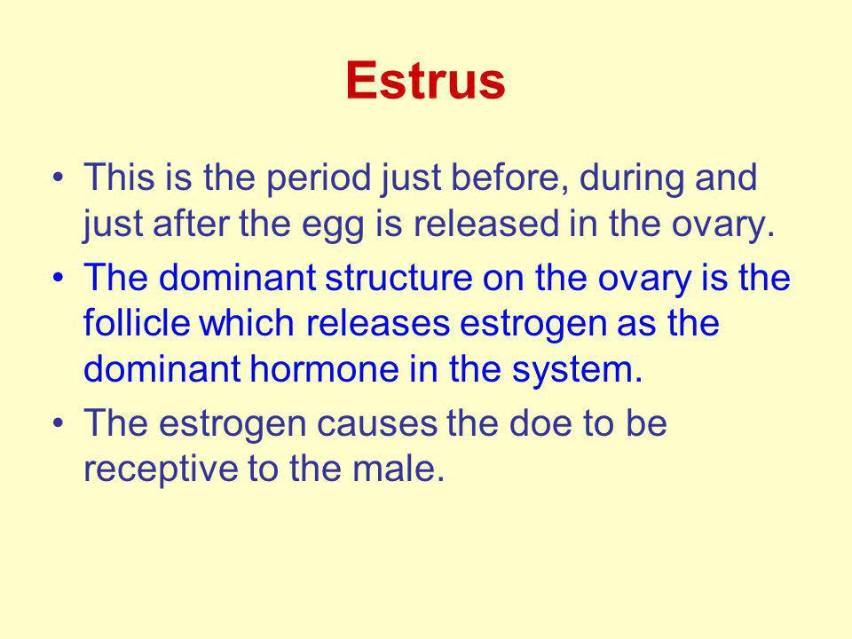 Estrus This is the period just before, during and just after the egg is released in the ovary.