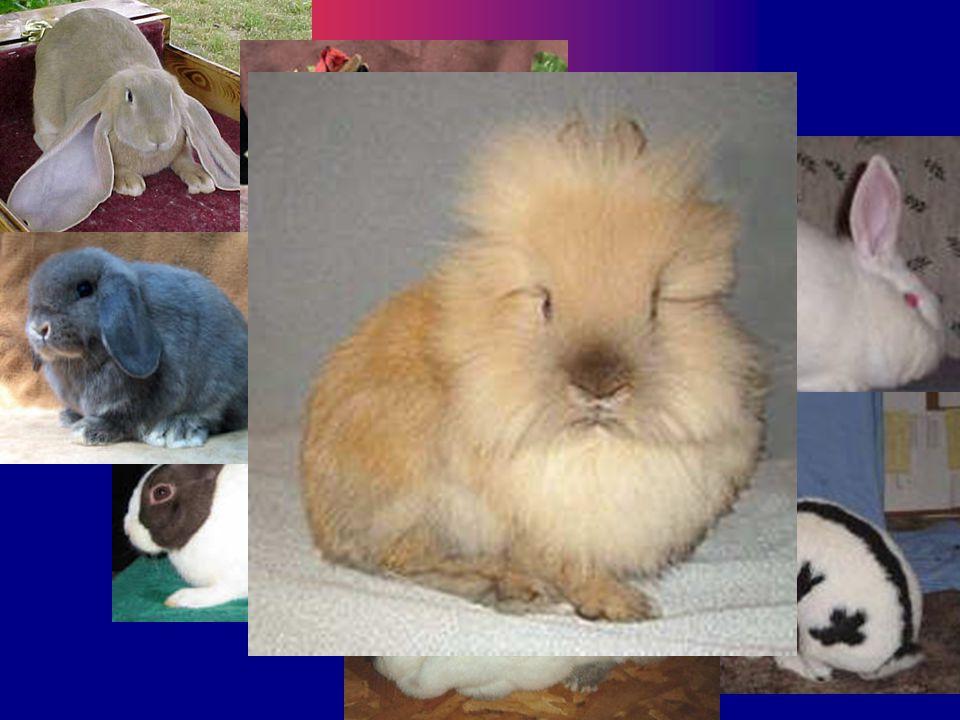 Rabbits By: Miss Crump AGR 102 Unit D