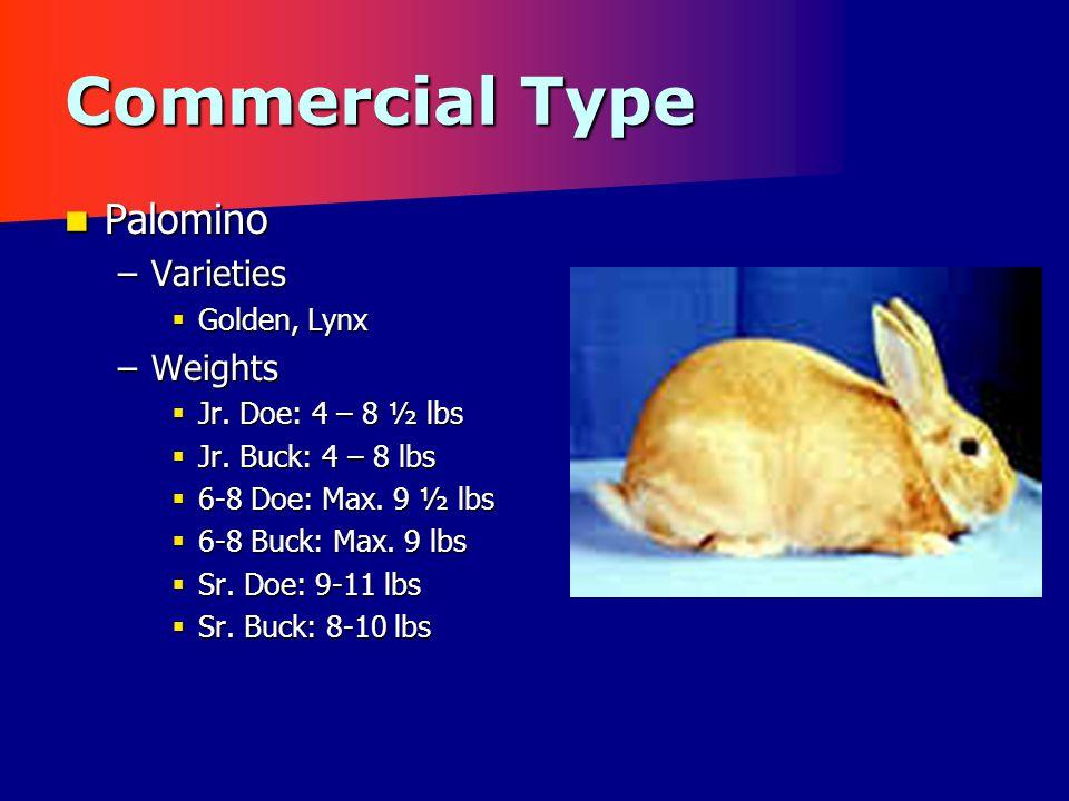 Commercial Type Palomino Palomino –Varieties  Golden, Lynx –Weights  Jr.