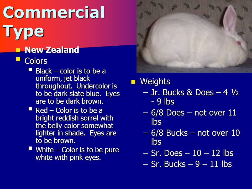 Commercial Type Satin Satin –Characteristics – The ideal fur should be silky, fine and very dense to the touch, due to a soft, very dense undercoat.