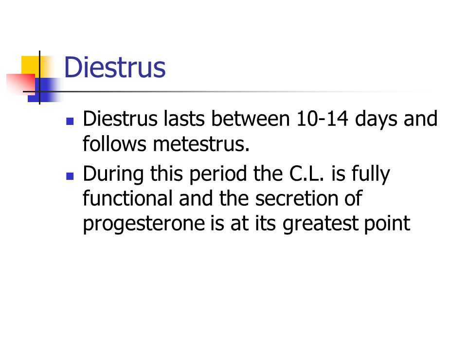 Diestrus Diestrus lasts between 10-14 days and follows metestrus. During this period the C.L. is fully functional and the secretion of progesterone is