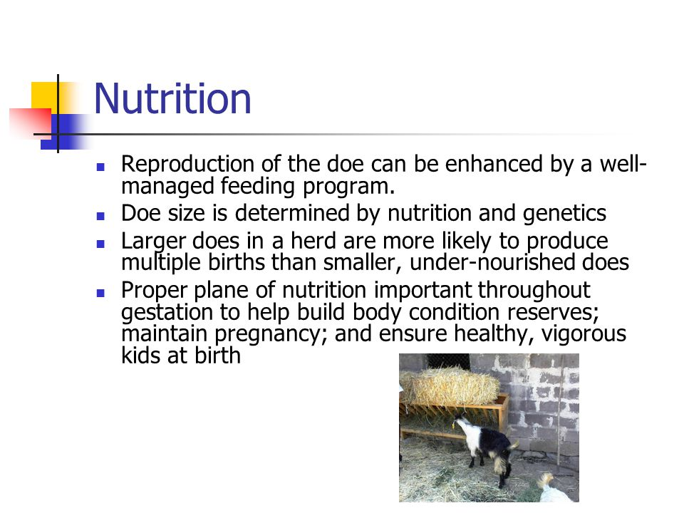 Nutrition Reproduction of the doe can be enhanced by a well- managed feeding program.