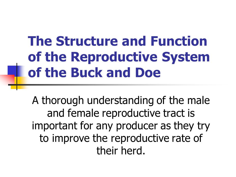 The Structure and Function of the Reproductive System of the Buck and Doe A thorough understanding of the male and female reproductive tract is important for any producer as they try to improve the reproductive rate of their herd.