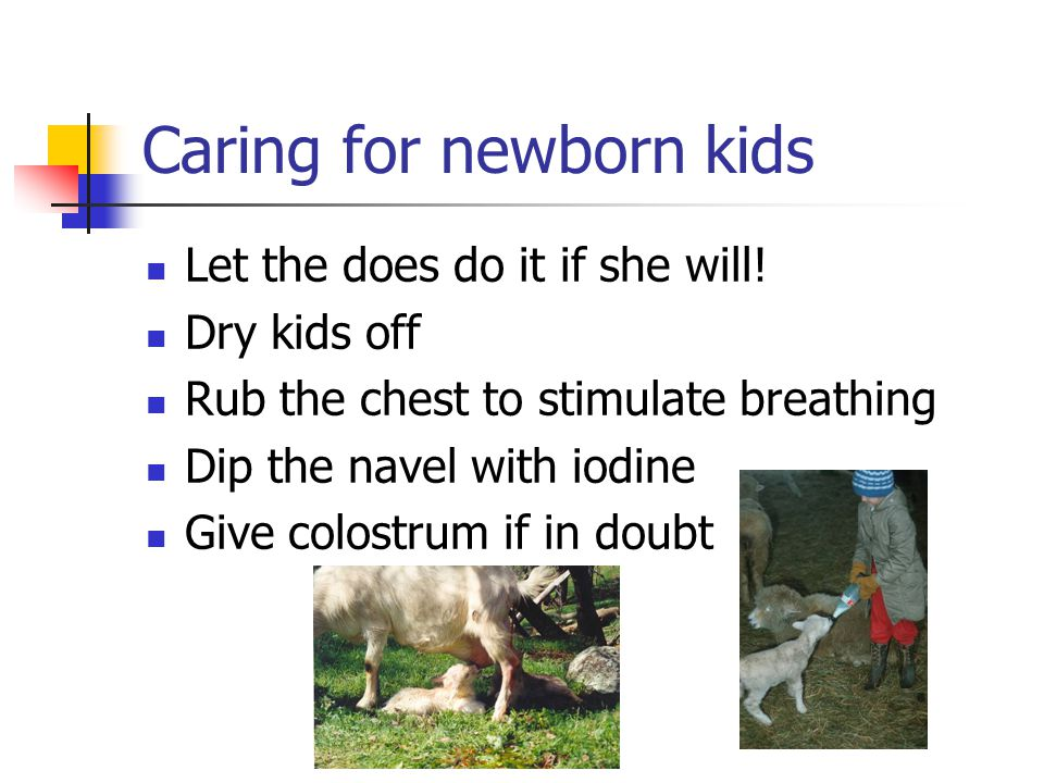 Caring for newborn kids Let the does do it if she will.