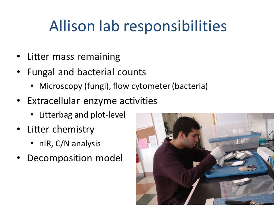 Allison lab responsibilities Litter mass remaining Fungal and bacterial counts Microscopy (fungi), flow cytometer (bacteria) Extracellular enzyme acti