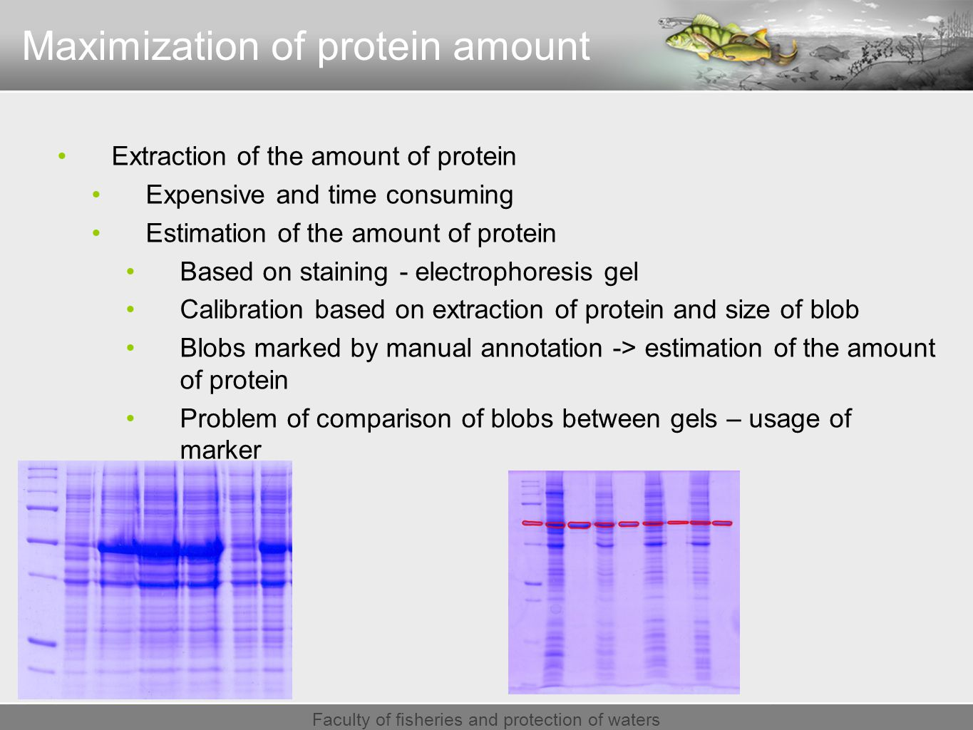 Faculty of fisheries and protection of waters Extraction of the amount of protein Expensive and time consuming Estimation of the amount of protein Based on staining - electrophoresis gel Calibration based on extraction of protein and size of blob Blobs marked by manual annotation -> estimation of the amount of protein Problem of comparison of blobs between gels – usage of marker Maximization of protein amount