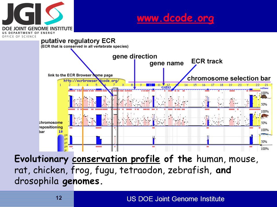 US DOE Joint Genome Institute 12 www.dcode.org Evolutionary conservation profile of the human, mouse, rat, chicken, frog, fugu, tetraodon, zebrafish, and drosophila genomes.