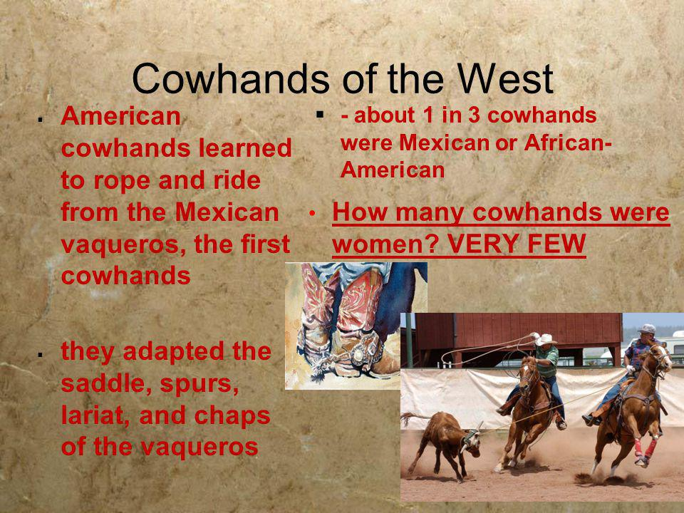 Cowhands of the West  American cowhands learned to rope and ride from the Mexican vaqueros, the first cowhands  they adapted the saddle, spurs, lari
