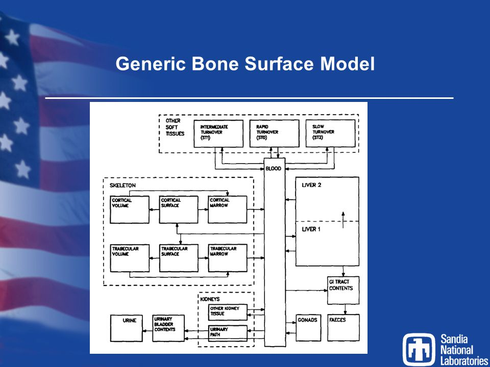 Generic Bone Surface Model