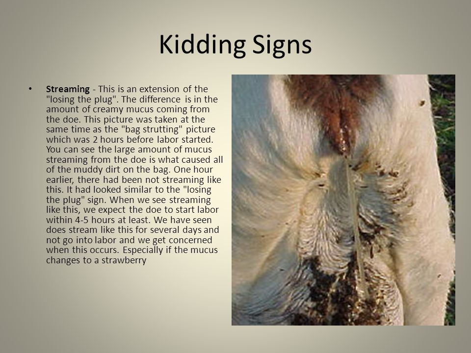 Kidding Signs Streaming - This is an extension of the losing the plug .