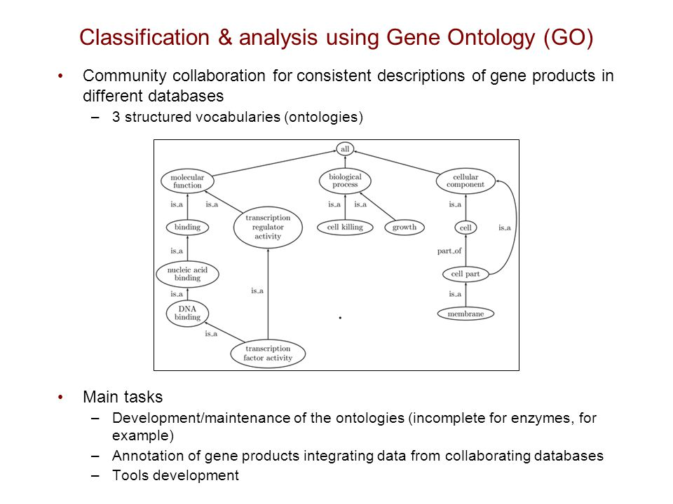 Classification & analysis using Gene Ontology (GO) Community collaboration for consistent descriptions of gene products in different databases –3 stru