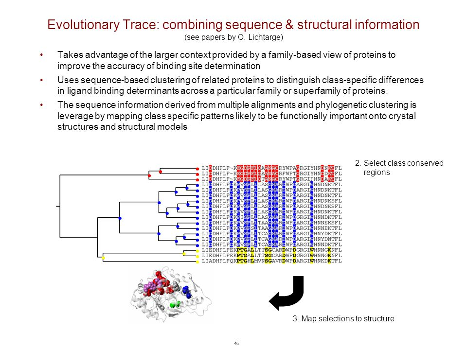 46 Evolutionary Trace: combining sequence & structural information (see papers by O. Lichtarge) Takes advantage of the larger context provided by a fa