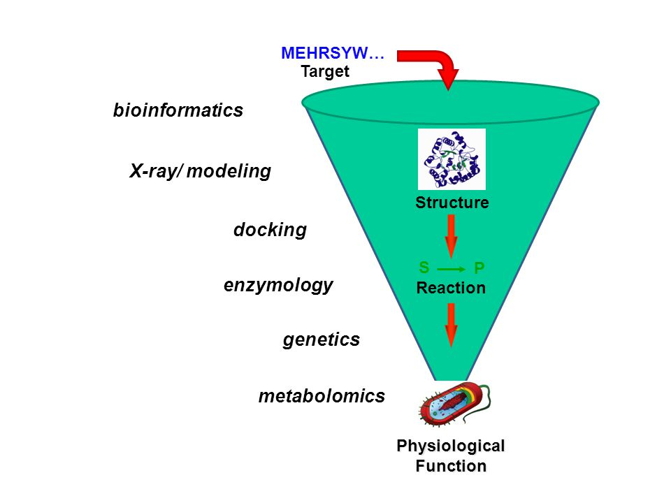 MEHRSYW… Target Structure Reaction bioinformatics enzymology X-ray/ modeling docking S P genetics metabolomics Physiological Function
