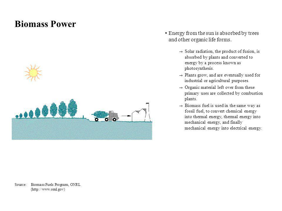 Biomass Power Energy from the sun is absorbed by trees and other organic life forms.  Solar radiation, the product of fusion, is absorbed by plants a