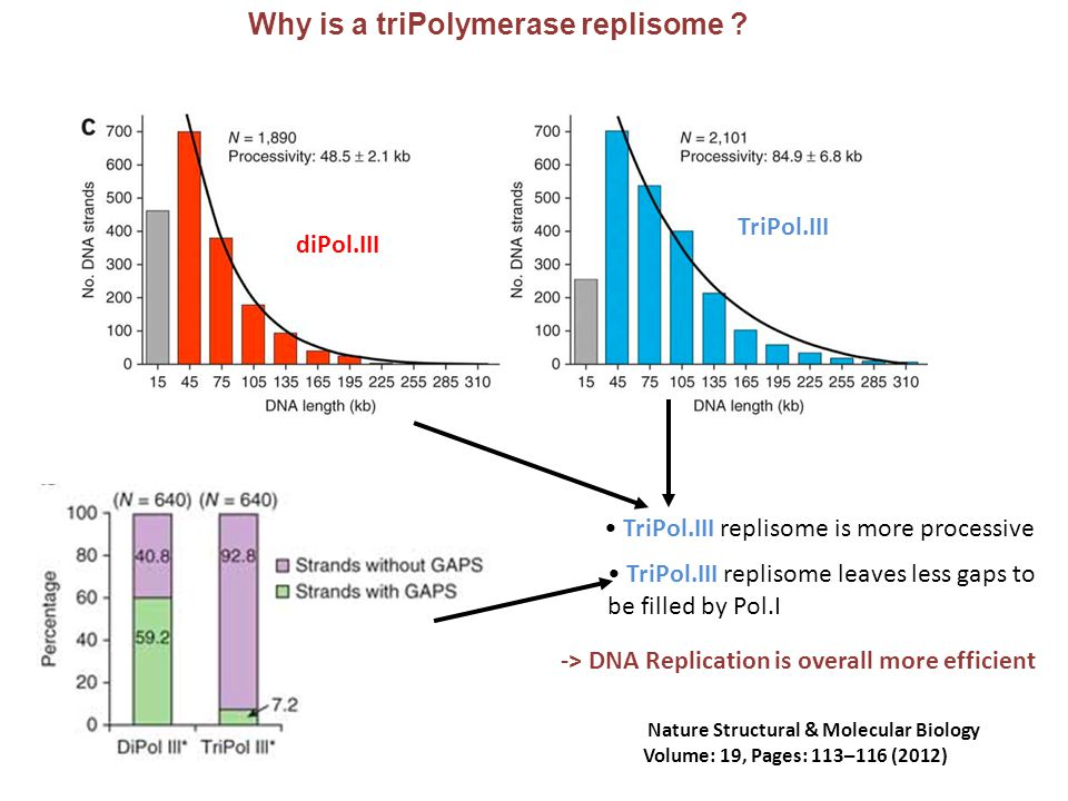Why is a triPolymerase replisome ? TriPol.III replisome is more processive Nature Structural & Molecular Biology Volume: 19, Pages: 113–116 (2012) Tri