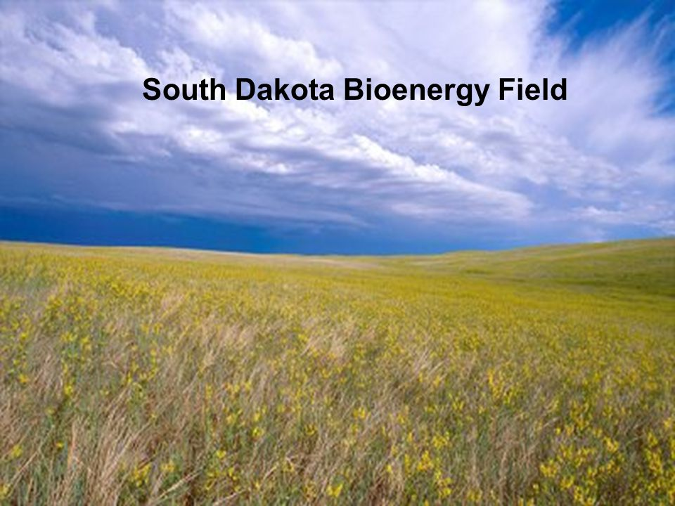 South Dakota Bioenergy Field