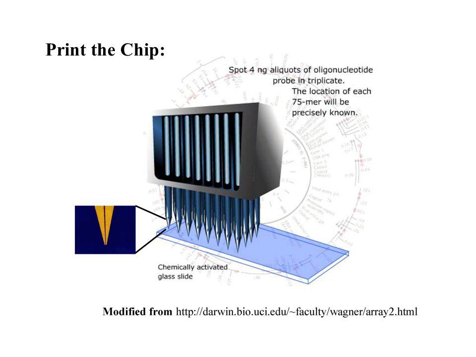 19 Print the Chip: