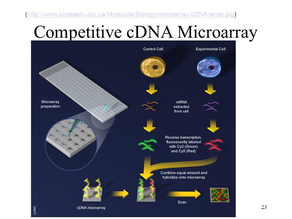23 Competitive cDNA Microarray (http://www.bioteach.ubc.ca/MolecularBiology/microarray/cDNA-array.jpg)http://www.bioteach.ubc.ca/MolecularBiology/microarray/cDNA-array.jpg
