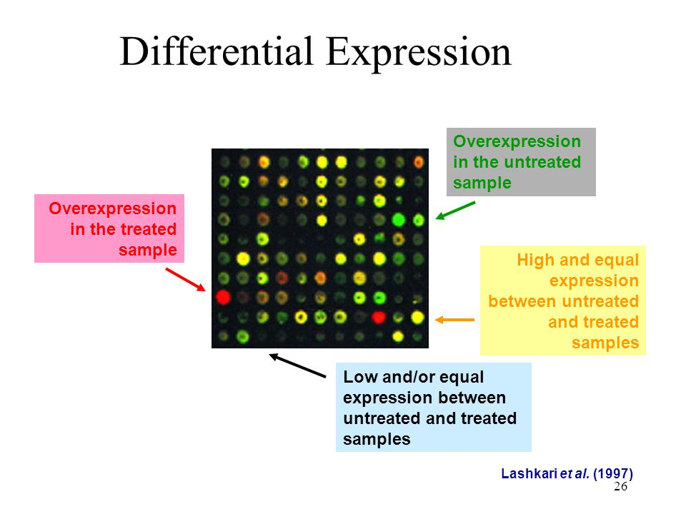 26 Differential Expression Lashkari et al. (1997) Overexpression in the untreated sample Overexpression in the treated sample High and equal expressio